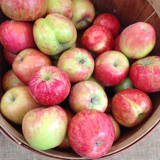 Honeycrisp Apples from the local Farmer's Market.