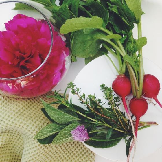 Radish and herbs